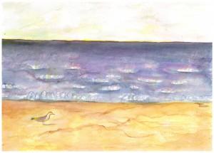 Seagull, Plum Island